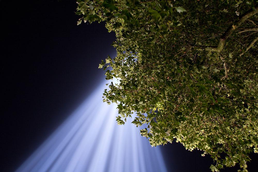 spectra_tree